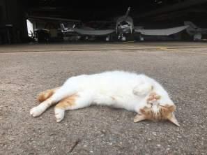 Gustav ist der Chef auf dem Fluplatz. Manchmal jagt er Mäuse, häufiger chillt er.